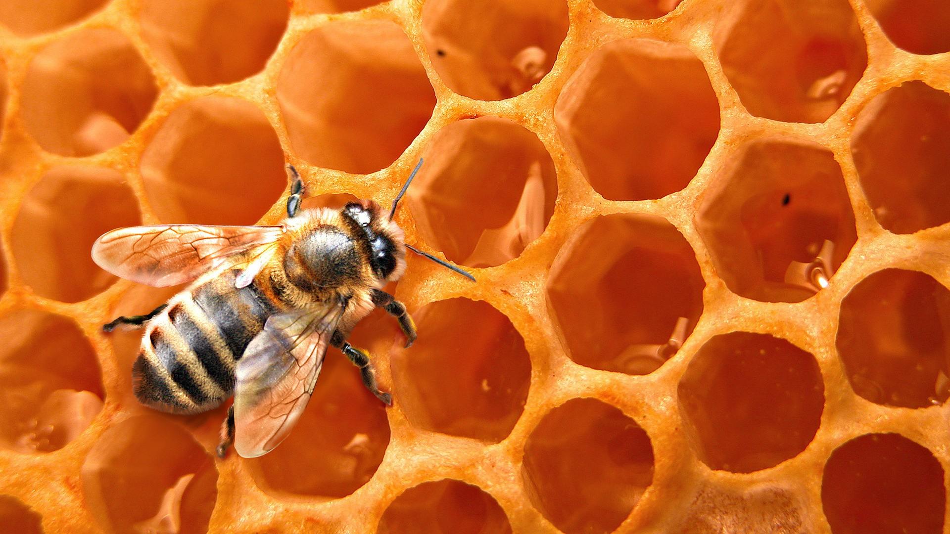 Miel soin beauté